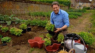 Alan Titchmarsh shows you how to grow your own strawberries