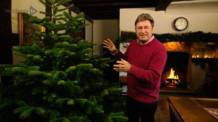 Alan Titchmarsh's top tips: Looking after your christmas tree